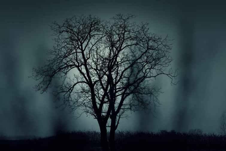 nature-night-dark-tree